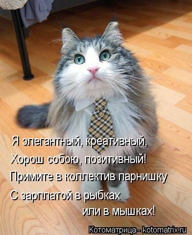 Котоматрица: Я элегантный, креативный, Хорош собою, позитивный! Примите в коллектив парнишку С зарплатой в рыбках или в мышках!