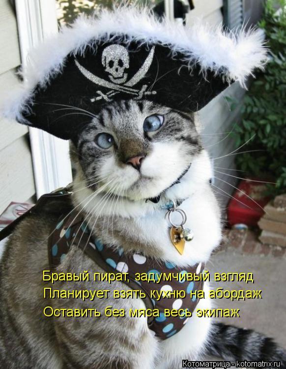 Котоматрица: Бравый пират, задумчивый взгляд Планирует взять кухню на абордаж Оставить без мяса весь экипаж