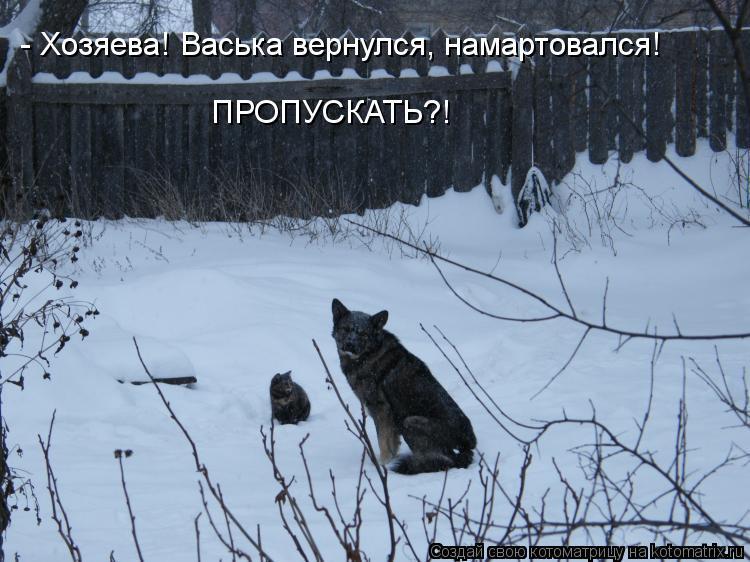 Котоматрица: - Хозяева! Васька вернулся, намартовался! ПРОПУСКАТЬ?!