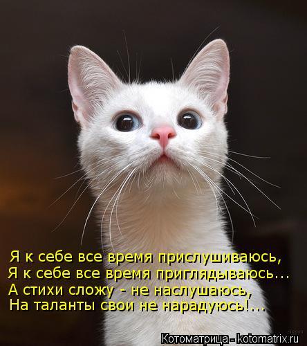 Котоматрица: Я к себе все время прислушиваюсь, Я к себе все время приглядываюсь... А стихи сложу - не наслушаюсь, На таланты свои не нарадуюсь!...
