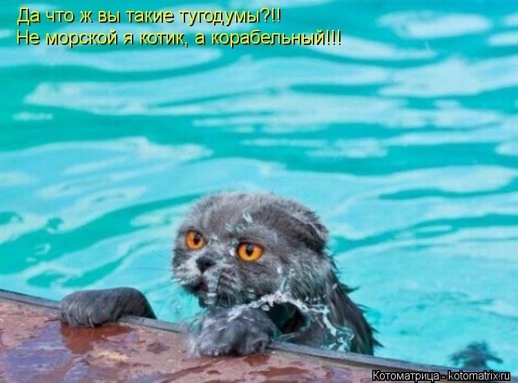 Котоматрица: Да что ж вы такие тугодумы?!! Не морской я котик, а корабельный!!!