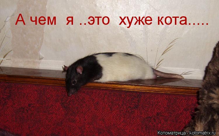 Котоматрица: А чем  я ..это  хуже кота.....