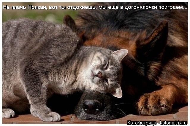 Котоматрица: Не плачь Полкан, вот ты отдохнешь, мы еще в догонялочки поиграем...