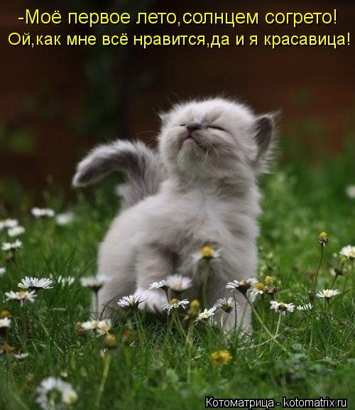 Котоматрица: Ой,как мне всё нравится,да и я красавица! -Моё первое лето,солнцем согрето!