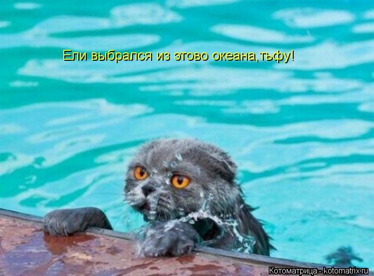 Котоматрица: Ели выбрался из этово океана,тьфу!