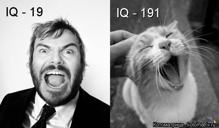 Котоматрица: IQ - 19 IQ - 191