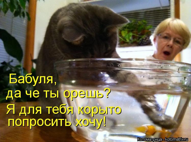 Котоматрица: Бабуля, да че ты орешь? Я для тебя корыто попросить хочу!