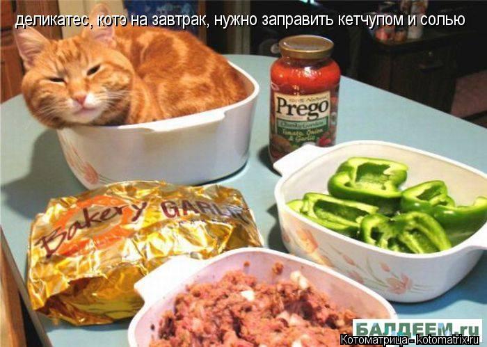 Котоматрица: деликатес, котэ на завтрак, нужно заправить кетчупом и солью