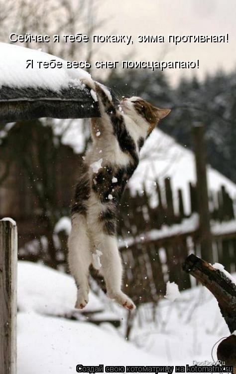 Котоматрица: Сейчас я тебе покажу, зима противная! Я тебе весь снег поисцарапаю!