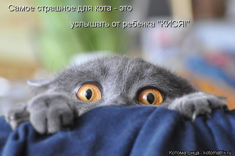 """Котоматрица: Самое страшное для кота - это  услышать от ребёнка """"КИСЯ!"""""""