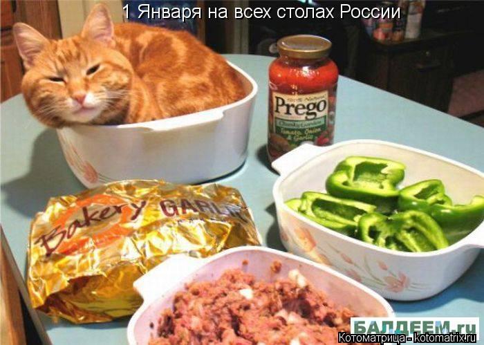 Котоматрица: 1 Января на всех столах России