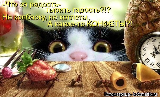 Котоматрица: -Что за радость- Не колбаску, не котлеты, тырить гадость?!? А какие-то КОНФЕТЫ?!