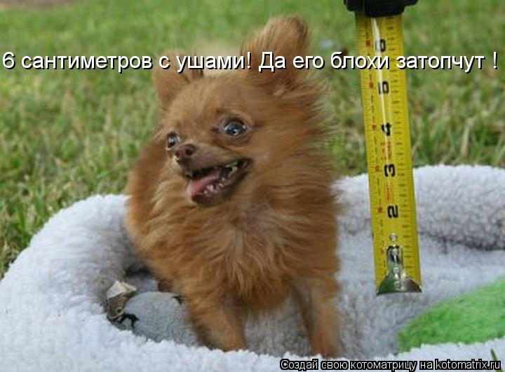 Котоматрица: 6 сантиметров с ушами! Да его блохи затопчут !