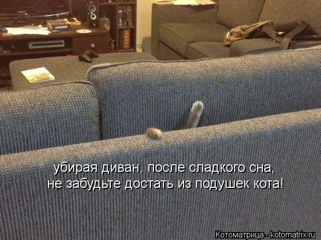 Котоматрица: убирая диван, после сладкого сна, не забудьте достать из подушек кота!