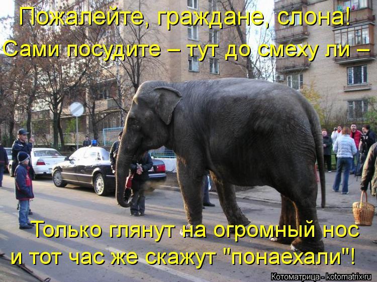 """Котоматрица: Пожалейте, граждане, слона!  Сами посудите – тут до смеху ли –  Только глянут на огромный нос  и тот час же скажут """"понаехали""""!"""