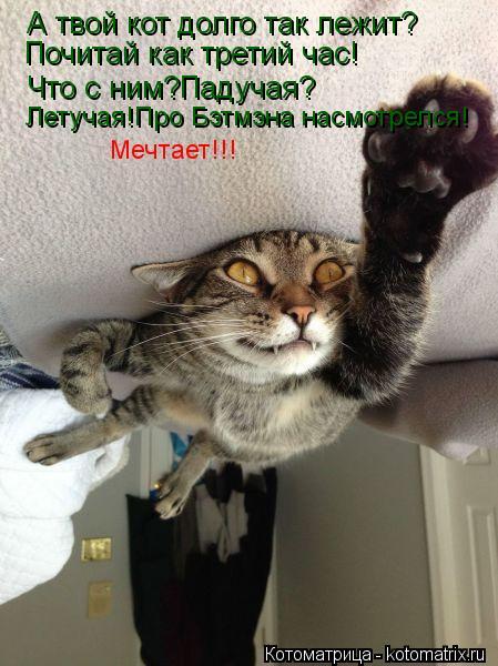 Котоматрица: А твой кот долго так лежит? Почитай как третий час! Что с ним?Падучая? Летучая!Про Бэтмэна насмотрелся! Мечтает!!!