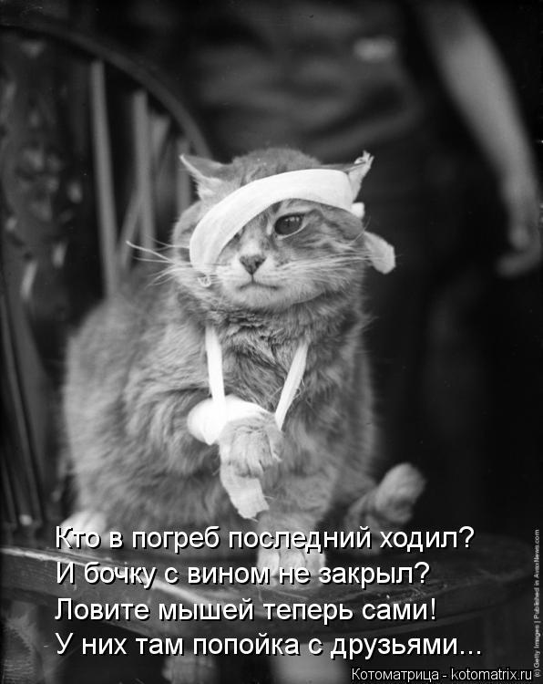 Котоматрица: Кто в погреб последний ходил? И бочку с вином не закрыл? Ловите мышей теперь сами! У них там попойка с друзьями...