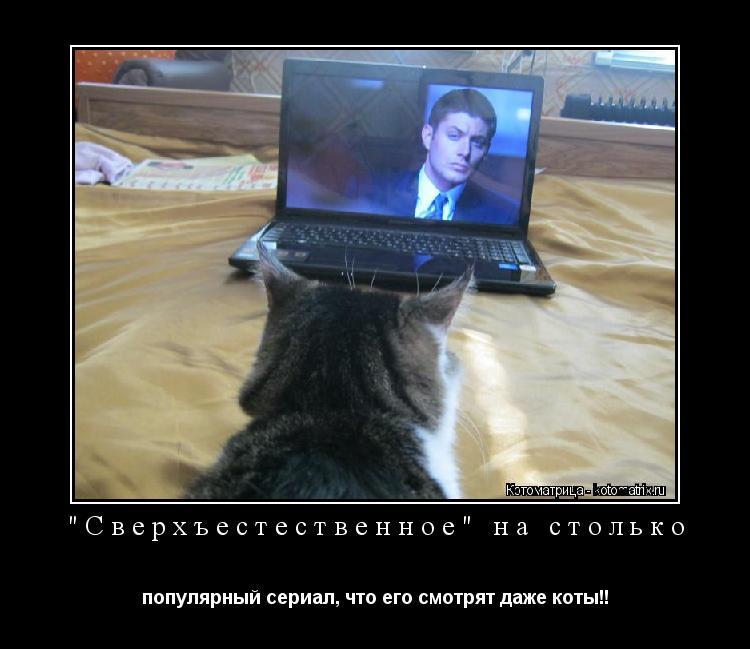 """Котоматрица: """"Сверхъестественное"""" на столько  популярный сериал, что его смотрят даже коты!!"""