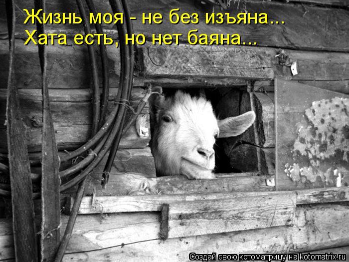 Котоматрица: Жизнь моя - не без изъяна... Хата есть, но нет баяна...
