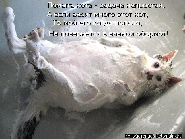 Котоматрица: Помыть кота - задача непростая, А если весит много этот кот, То мой его когда попало, Не повернется в ванной обормот!