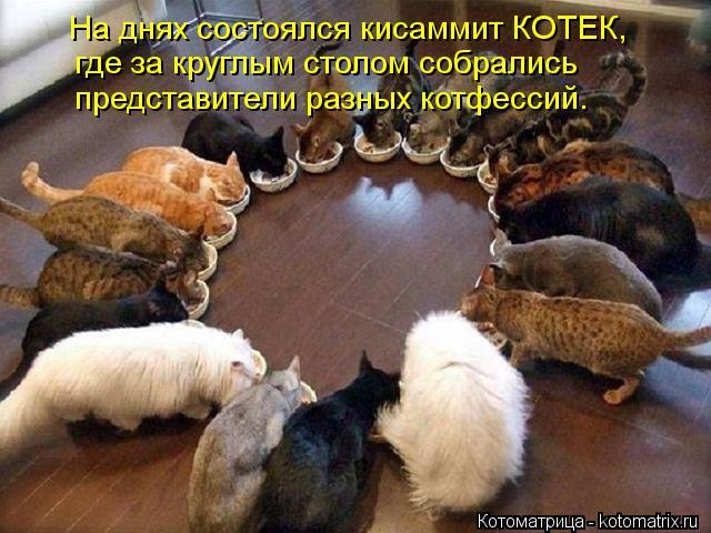 Котоматрица: На днях состоялся кисаммит КОТЕК, где за круглым столом собрались представители разных котфессий.