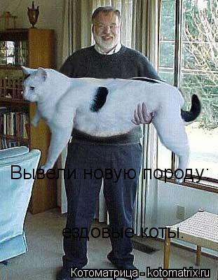Котоматрица: Вывели новую породу: ездовые коты.