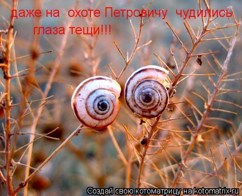 Котоматрица: даже на  охоте Петровичу  чудились глаза тещи!!!