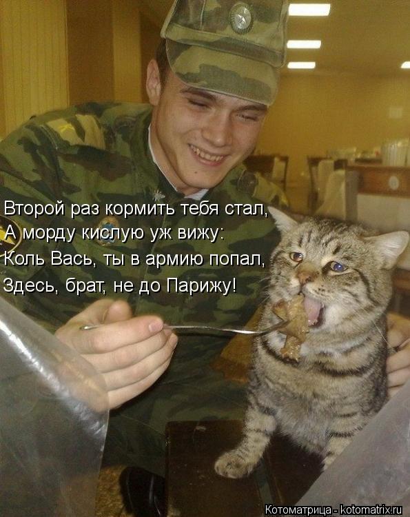 Котоматрица: Второй раз кормить тебя стал, А морду кислую уж вижу:   Коль Вась, ты в армию попал, Здесь, брат, не до Парижу!