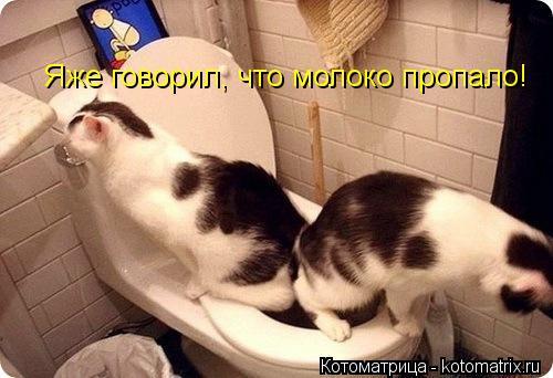 Котоматрица: Яже говорил что Яже говорил, что молоко пропало!
