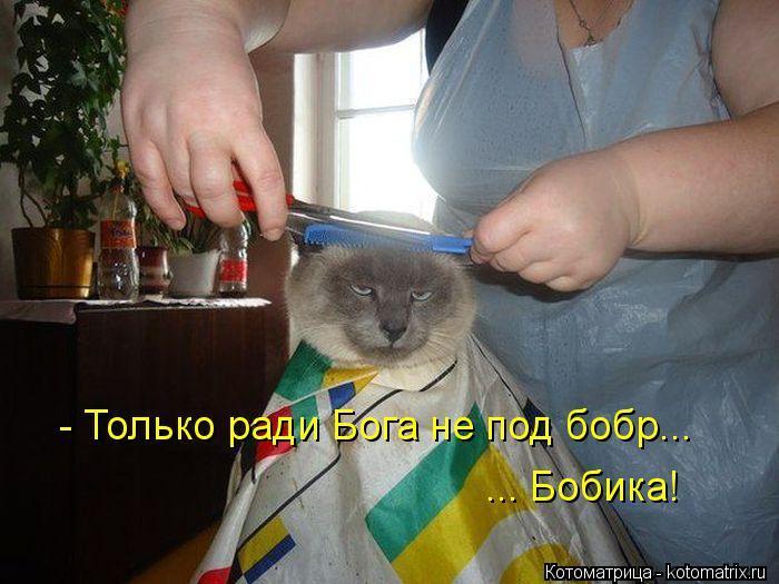 Котоматрица: - Только ради Бога не под бобр... ... Бобика!