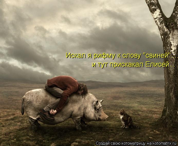 """Котоматрица: Искал я рифму к слову """"свиней"""".... и тут прискакал Елисей..."""