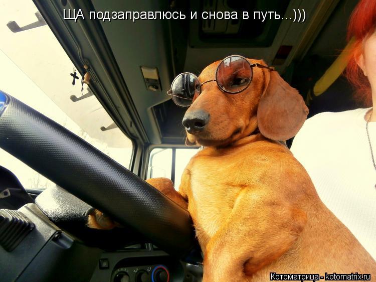 Котоматрица: ЩА подзаправлюсь и снова в путь...)))