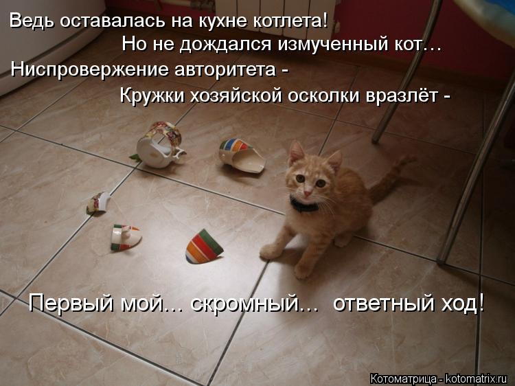 Котоматрица: Ведь оставалась на кухне котлета! Но не дождался измученный кот… Ниспровержение авторитета -  Кружки хозяйской осколки вразлёт -  Первый мо