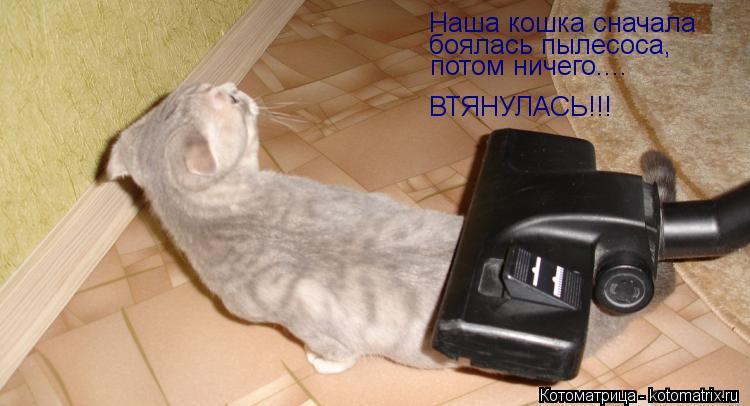 Котоматрица: Наша кошка сначала боялась пылесоса, потом ничего.... ВТЯНУЛАСЬ!!!