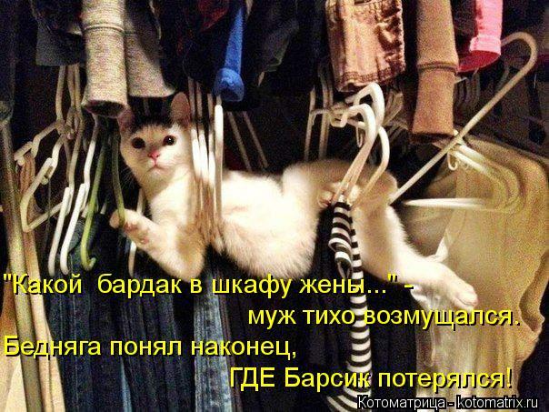 """Котоматрица: """"Какой  бардак в шкафу жены..."""" - муж тихо возмущался. Бедняга понял наконец, ГДЕ Барсик потерялся!"""