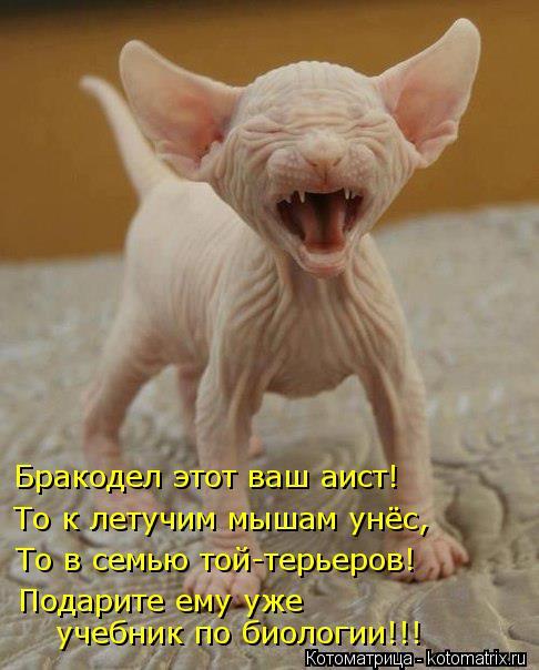 Котоматрица: Бракодел этот ваш аист! То к летучим мышам унёс, То в семью той-терьеров! Подарите ему уже  учебник по биологии!!!