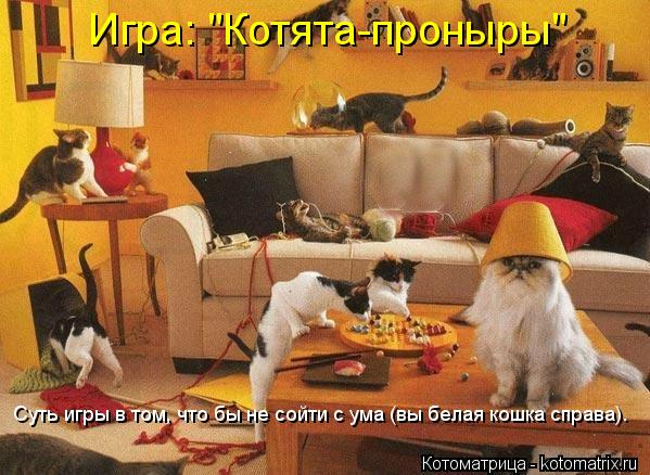 """Котоматрица: Игра: """"Котята-проныры"""" Суть игры в том, что бы не сойти с ума (вы белая кошка справа)."""