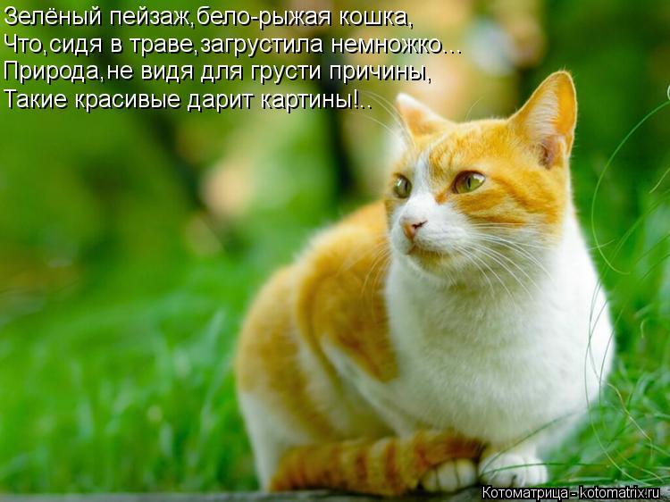 Котоматрица: Зелёный пейзаж,бело-рыжая кошка, Что,сидя в траве,загрустила немножко... Природа,не видя для грусти причины, Такие красивые дарит картины!..