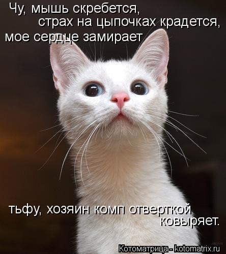Котоматрица: Чу, мышь скребется, страх на цыпочках крадется, мое сердце замирает тьфу, хозяин комп отверткой ковыряет.