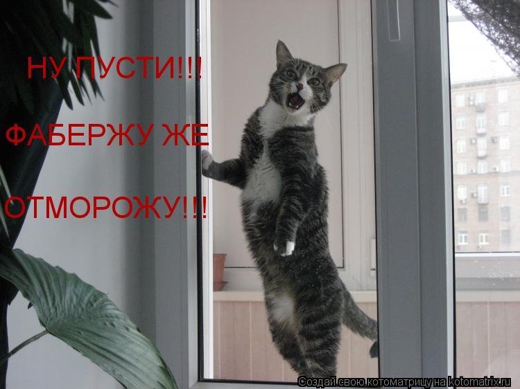 Котоматрица: НУ ПУСТИ!!! ФАБЕРЖУ ЖЕ ОТМОРОЖУ!!!