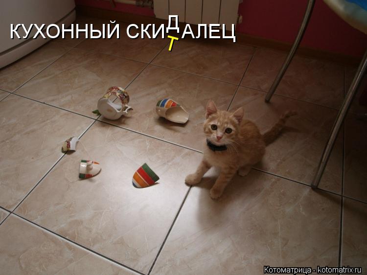 Котоматрица: КУХОННЫЙ СКИ   АЛЕЦ Д Т