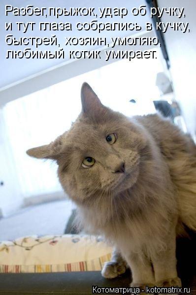 Котоматрица: Разбег,прыжок,удар об ручку, и тут глаза собрались в кучку, быстрей, хозяин,умоляю, любимый котик умирает.