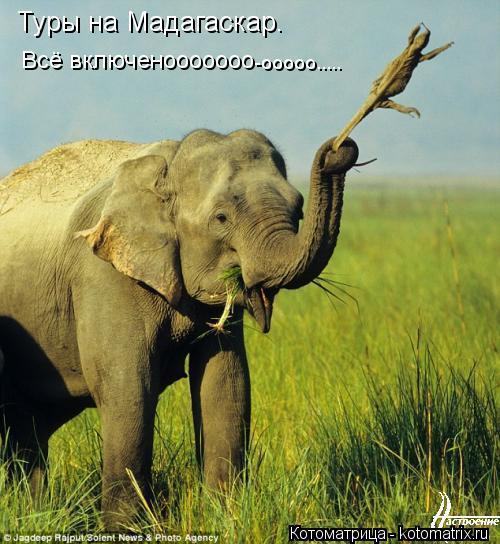 Котоматрица: Туры на Мадагаскар. Всё включенооооооо -ооооо.....