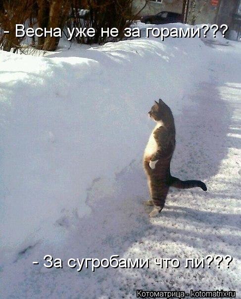 Котоматрица: - Весна уже не за горами??? - За сугробами что ли???