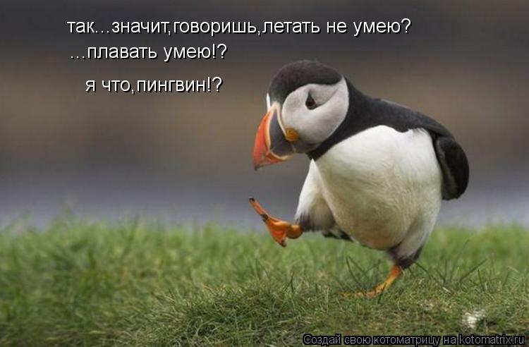Котоматрица: так...значит,говоришь,летать не умею? ...плавать умею!? я что,пингвин!?