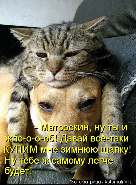 Котоматрица: - Матроскин, ну ты и  жло-о-о-об! Давай всё-таки КУПИМ мне зимнюю шапку! Ну тебе ж самому легче будет!