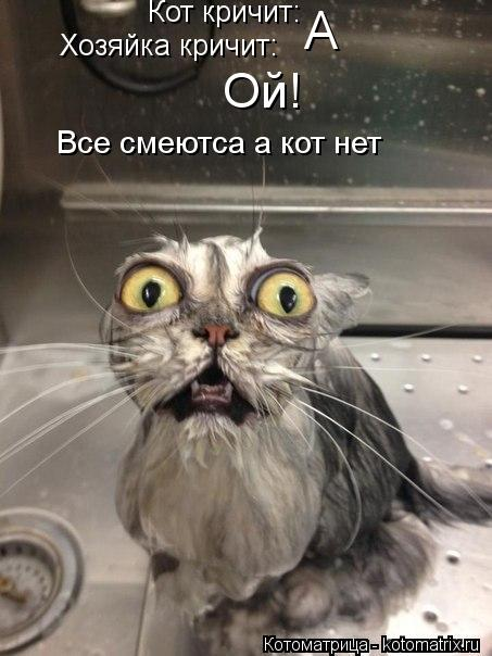 Котоматрица: Кот кричит: А Хозяйка кричит: Ой! Все смеютса а кот нет