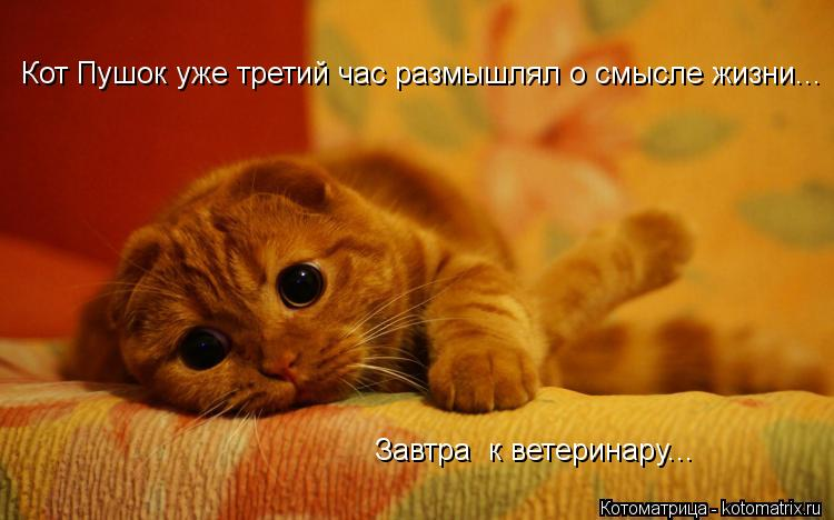 Котоматрица: Завтра  к ветеринару... Кот Пушок уже третий час размышлял о смысле жизни...