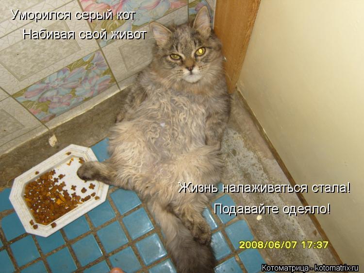 Котоматрица: Уморился серый кот Жизнь налаживаться стала! Набивая свой живот Подавайте одеяло!