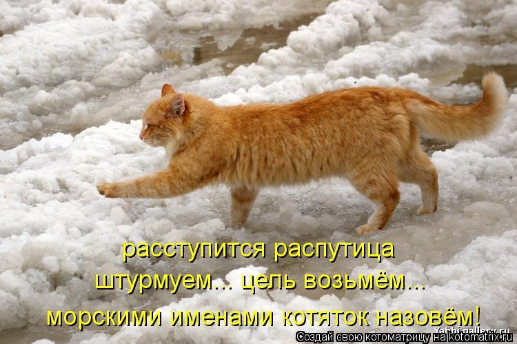 Котоматрица: расступится распутица штурмуем... цель возьмём... морскими именами котяток назовём!